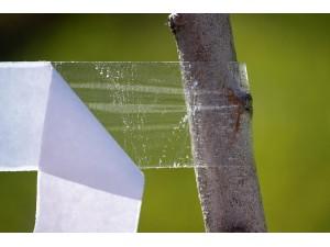 Banda lipicioasa pentru insecte